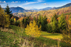 Autumn mountain landscape with mixed forest Stock Photo