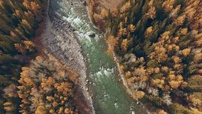 Autumn mountain landscape: a river with a rolling river flows, aerial. Autumn mountain landscape: a river with a rolling river flows along the mountainous stock video footage