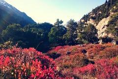 Autumn mountain landscape switzerland Stock Photography