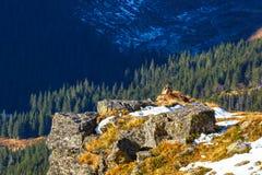 Autumn mountain landscape, Tatras Mountain Royalty Free Stock Photo