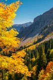 Autumn mountain landscape with yellow, orange and red foliage trees and green pines. Abkhazia, Pshegishva trail. Vertical royalty free stock photo