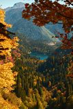 Autumn mountain landscape with yellow, orange and red foliage trees and green pines. Small Ritsla Lake View. Autumn mountain landscape with yellow, orange and royalty free stock photos
