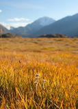 Autumn mountain meadow Stock Photography