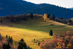 Autumn mountain meadow with grass and mixed forest in morning li Stock Photo