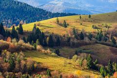 Autumn mountain meadow with grass and mixed forest in morning li Stock Images