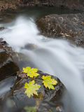 Autumn mountain river Stock Images