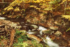Autumn mountain river. Stream in the forest with colorful red fallen dry leaves, natural seasonal background Stock Photography