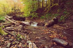 Autumn mountain river. Stream in the rocks with colorful red fallen dry leaves, natural seasonal background Stock Photography