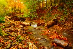 Autumn mountain river. Stream in the rocks with colorful red fallen dry leaves, natural seasonal background Stock Photo