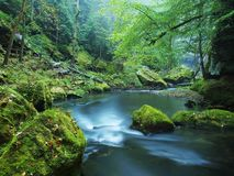 Autumn at mountain river banks. Fresh green mossy boulders on river banks Royalty Free Stock Photo