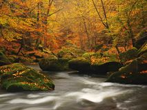 Autumn mountain river with blurred waves, fresh green mossy stones, colorful fall Stock Photos