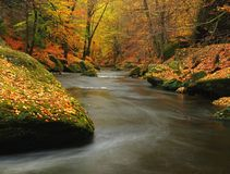 Autumn mountain river with blurred waves, fresh green mossy stones, colorful fall Stock Photo