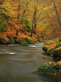 Autumn mountain river with blurred waves, fresh green mossy stones, colorful fall Stock Images