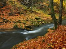 Autumn mountain river with blurred waves, fresh green mossy stones, colorful fall Royalty Free Stock Photo