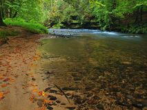 Autumn mountain river with low level of water, fresh green mossy stones and boulders on river bank covered with colorful leaves Royalty Free Stock Photos