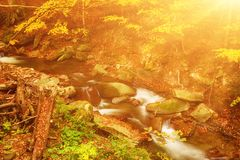 Autumn mountain river. Stream in the forest with colorful red fallen dry leaves, natural seasonal background Stock Image