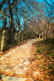 Autumn mountain road Stock Image