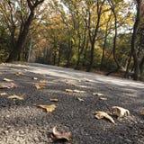 Autumn mountain roads Royalty Free Stock Image