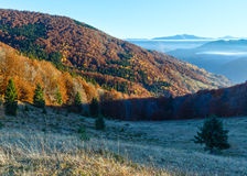 Autumn  mountain slope with colorful forest. Royalty Free Stock Image