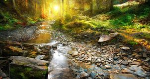 Autumn. Mountain spring, forest landscape. Autumn scene. Mountain spring, forest landscape Stock Images