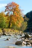 Autumn mountain stony river Royalty Free Stock Image