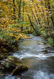 Autumn mountain stream surrounded by yellow colors Stock Image