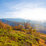 Autumn mountain valley  at the evening Royalty Free Stock Images