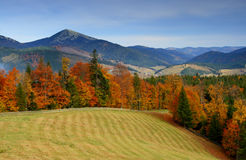Autumn in mountains. The mountain autumn landscape with colorful forest Royalty Free Stock Photo
