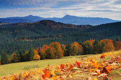 Autumn in mountains. The mountain autumn landscape with colorful forest Stock Photos