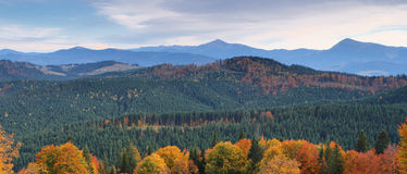 Autumn in mountains. The mountain autumn landscape with colorful forest Royalty Free Stock Photos