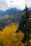 Autumn mountains. And aspen trees Royalty Free Stock Photography