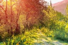 Autumn Mountains imagem de stock royalty free