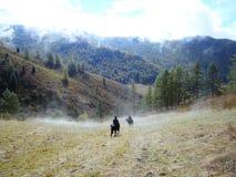 Autumn in the mountains. In the mountains of Altai came warm autumn Stock Photo