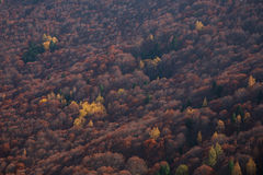 Autumn in mountains. Beautiful forest in Europe (Macedonia Royalty Free Stock Image