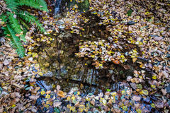 Autumn in the mountains. Domodossola, Piemonte Italy royalty free stock images