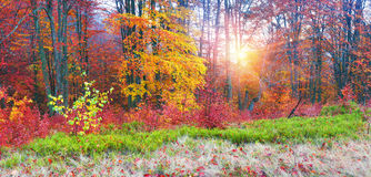 Autumn in the mountains of Europe Royalty Free Stock Image