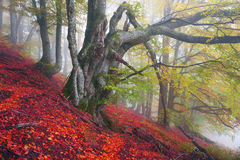 Autumn in the mountains of Europe Royalty Free Stock Photography