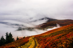 Autumn in mountains valley breathing with fog and clouds golden red grass Stock Images