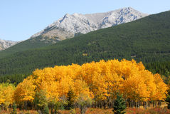 Autumn mountains and forests Royalty Free Stock Photography