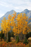 Autumn mountains and forests. Colorful autumn view of rocky mountains and forests in kananaskis country, alberta, canada Stock Photography