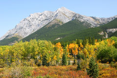 Autumn mountains and forests. Colorful autumn view of rocky mountains and forests in kananaskis country, alberta, canada Royalty Free Stock Photography