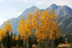 Autumn mountains and forests. Colorful autumn view of rocky mountains and forests in kananaskis country, alberta, canada Royalty Free Stock Images