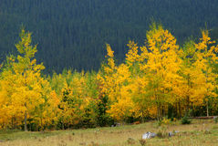 Autumn mountains and forests Stock Image