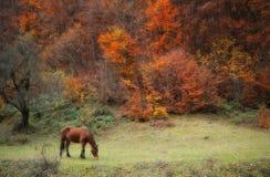 Autumn in mountains. Horse. Stock Photo