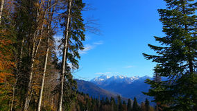 Autumn in the mountains, Krasnaya Polyana, Russia. Beautiful autumn in the mountains, resort Krasnaya Polyana, Sochi. Snow-capped peaks, tall trees and blue sky Stock Photo