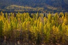 Autumn Mountains Landscapes, Repubblica di Altai Fotografia Stock