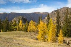Autumn Mountains Landscapes, Repubblica di Altai Immagine Stock