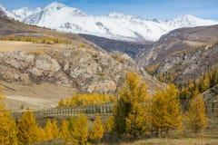 Autumn Mountains Landscapes, Repubblica di Altai Immagine Stock Libera da Diritti