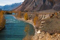 Autumn Mountains Landscapes, Repubblica di Altai, Russia nave Fotografia Stock Libera da Diritti