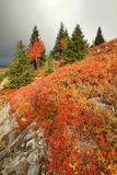 Autumn in mountains Stock Images